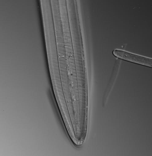 ImageJ=1.50i unit=inch